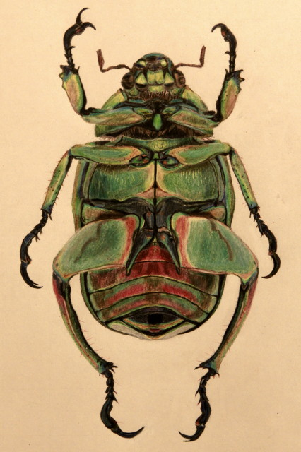 Beetle2_1