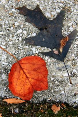 Raking Leaves 004_2_1