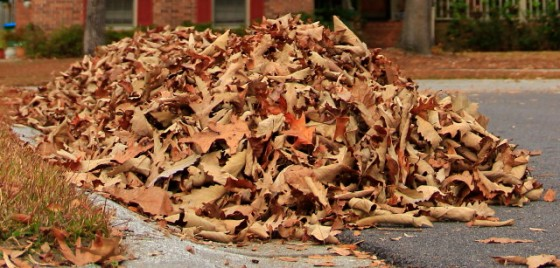 Raking Leaves 009_2_1
