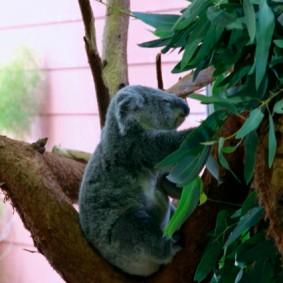 Riverbank Zoo 078_2_1