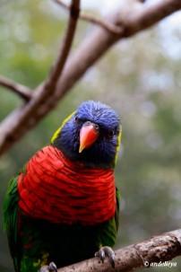 Riverbank Zoo 109_2_1