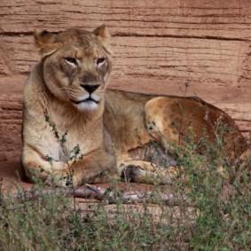 Riverbank Zoo 113_2_1