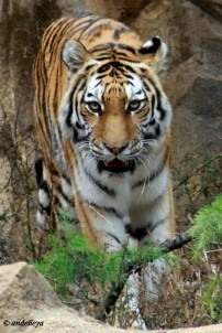 Riverbank Zoo 147_2_1