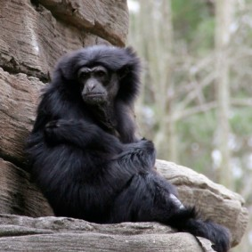 Riverbank Zoo 156_2_1