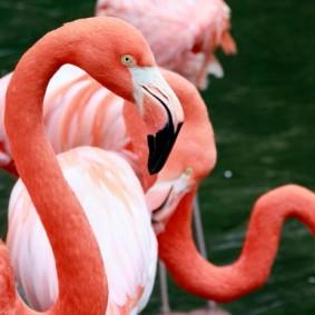 Riverbank Zoo 184_2_1