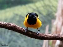 Riverbank Zoo 207_2_1