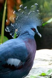Riverbank Zoo 238_2_1