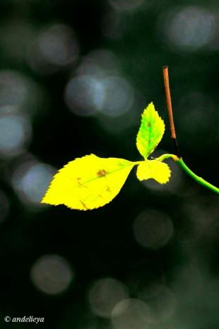 Bokeh Leaf