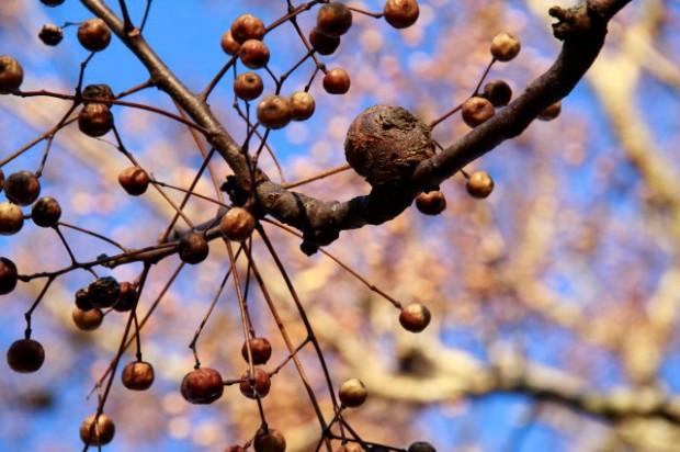 Tree Project 052_2_1