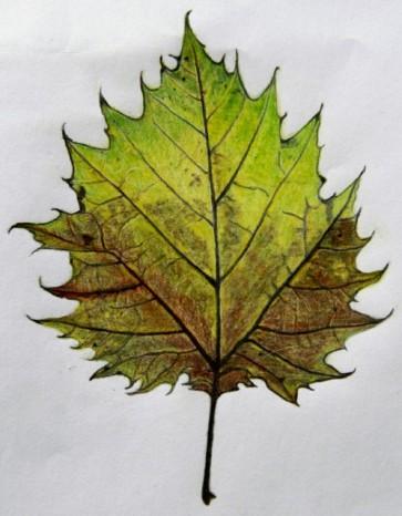 Leaf1_1