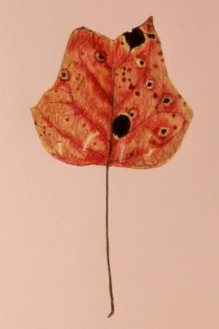 Leaf2 001_1