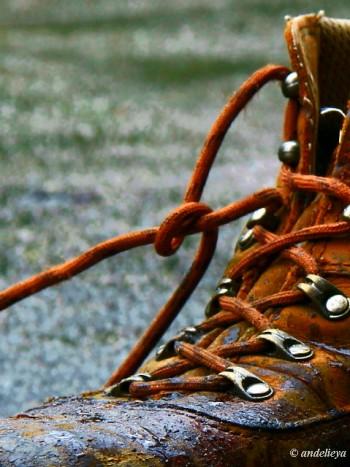 Shoe Strings