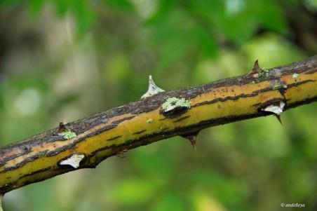 Magnolia 033_2