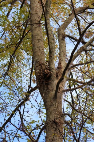 Squirrel Nest