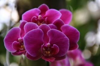 Magnolia 008_1