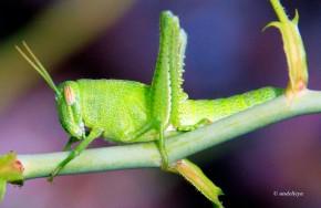 Grasshopper 03