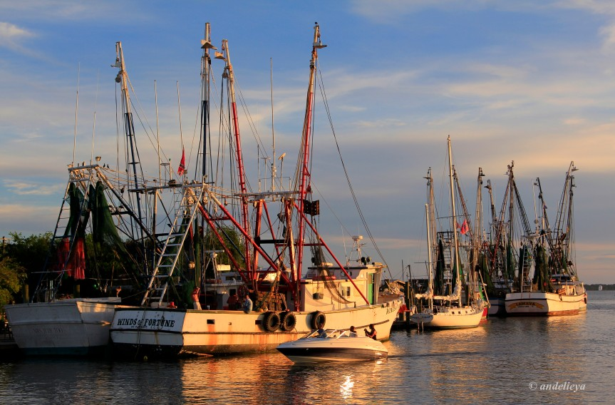 Shem Creek Boats for SCIWAY
