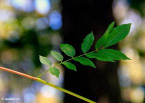 Leaf2_1